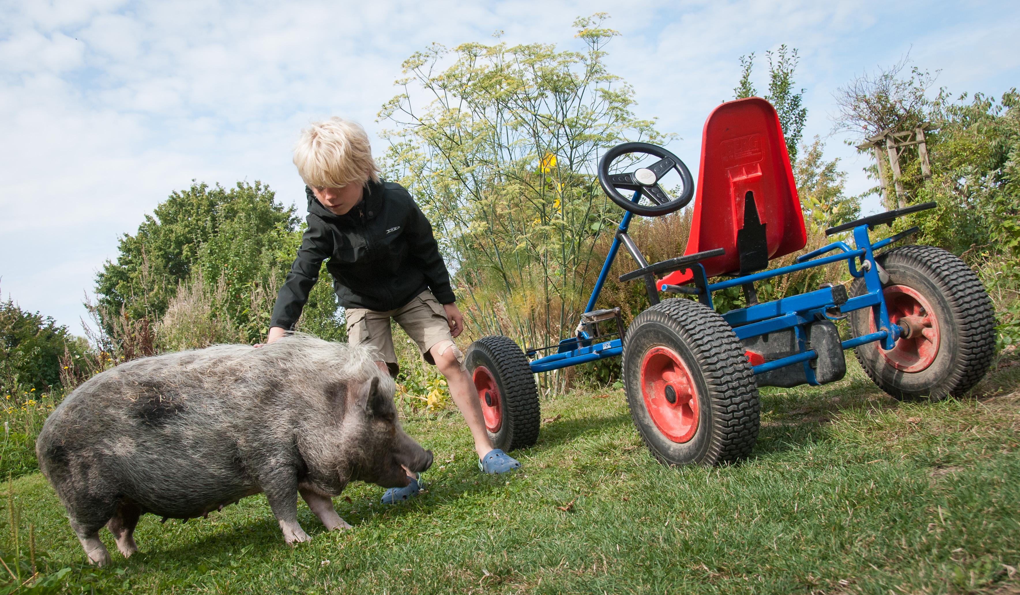 schweine werfen